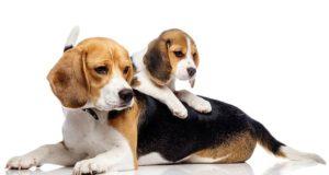 Mit tegyünk, ha a kutya szétrág mindent? - Zooplus Kutya Magazin