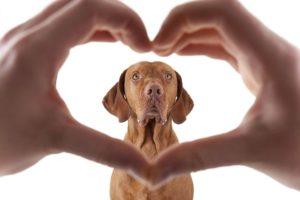 Segítség, antiszociális a kutyám! Mit tegyek, hogy barátságosabb legyen? - Az Én Kutyám
